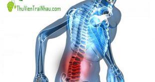nhàu trị đau lưng, nhau tri dau lung