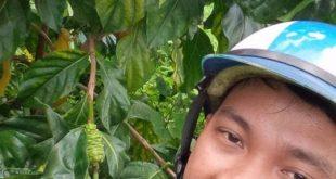 trái nhàu tươi trị bệnh